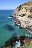 漂浮海洋表面上的海草 库存图片