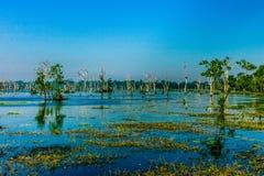 漂浮的寺庙的,暹粒,柬埔寨沼泽地 免版税库存图片