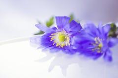 漂浮轻水表面上的两朵花 库存图片