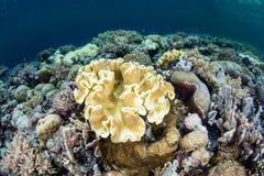 漂白的软的珊瑚起点 图库摄影