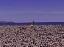 漂移木多岩石的海滩3499 免版税图库摄影