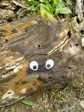 漂移木艺术 库存照片