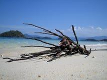 漂移的枝杈 图库摄影