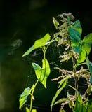 漂移在微风的花粉 免版税库存照片