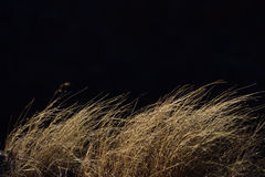 漂移在风的布朗干草 免版税图库摄影