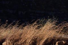 漂移在风的布朗干草 免版税库存图片