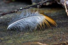漂移的羽毛 免版税图库摄影