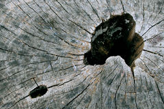 漏洞木头 免版税图库摄影
