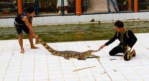 演员的讲话展示的与鳄鱼 库存照片