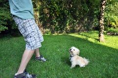 演奏与一条幼小havanese狗的取指令 免版税库存照片