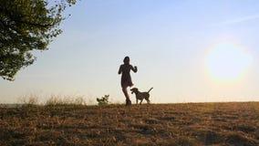 演奏与她逗人喜爱的狗的可爱的年轻女人赛跑在自然在日落期间 股票视频