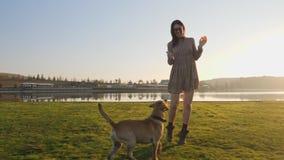 演奏与她逗人喜爱的狗的可爱的年轻女人赛跑在自然在湖附近 股票录像