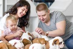 演奏人年轻人家庭的逗人喜爱的小狗牛头犬 免版税图库摄影