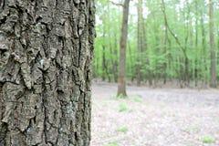演奏体育运动春天木头的小径 图库摄影