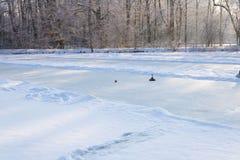 演奏卷曲在一个冻湖,奥地利,欧洲的人们 库存图片