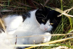 演奏在草的猫 免版税库存图片