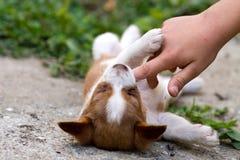 演奏小狗的bitting的手指 库存图片