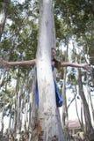 演奏捉迷藏的一个新可爱的女孩在森林 免版税库存照片