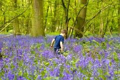 演奏森林的会开蓝色钟形花的草男孩 图库摄影