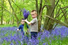 演奏森林的会开蓝色钟形花的草男孩 库存图片