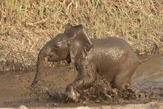 演奏水年轻人的大象 库存图片
