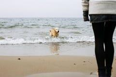 演奏水的狗 免版税图库摄影