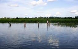 演奏河的亚马逊子项 图库摄影