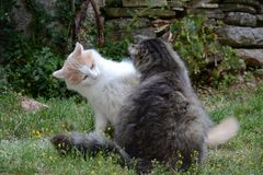演奏猫在庭院里 免版税库存图片