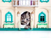 演奏玩具的逗人喜爱的房子小猫 免版税库存照片