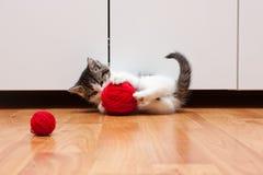 演奏白色的查出的小猫 库存照片