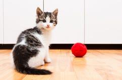 演奏白色的查出的小猫 免版税库存图片