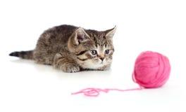 演奏红色的球英国线团小猫 库存照片