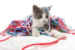 演奏纱线的小猫 免版税图库摄影