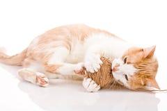 演奏羊毛的球小猫 库存图片
