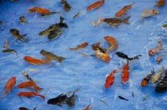 演奏金鱼挖出的比赛或纸scoo的亚裔泰国孩子 免版税图库摄影