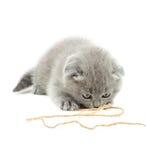 演奏绳索的灰色小猫 免版税库存照片