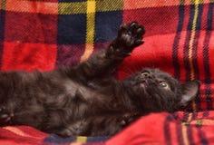 演奏说谎在后面的小猫 图库摄影