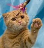 演奏plumelet的小猫 免版税库存照片