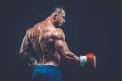 演播室射击的肌肉拳击手,在黑背景 免版税库存图片