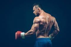 演播室射击的肌肉拳击手,在黑色 免版税库存照片