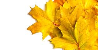 演播室照片,秋天叶子  9个秋天颜色 黄色红色绿色 图库摄影