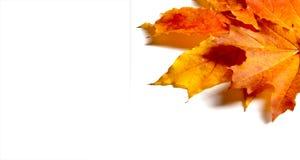 演播室照片,秋天叶子  9个秋天颜色 黄色红色绿色 免版税库存照片