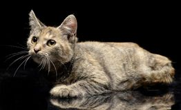 演播室被射击一只逗人喜爱的小的小猫 库存照片