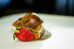 演播室被射击大蜗牛吃红色成熟草莓的Achatina 免版税库存照片