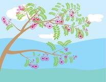 漩涡树 库存图片