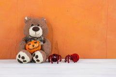 漩涡熊运载万圣夜南瓜和蜘蛛 库存照片