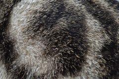 漩涡猫毛皮-黑色&白色 免版税库存照片
