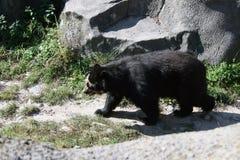 漫无边际的熊 免版税库存图片
