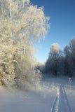 漫步冬天 库存图片