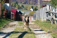 漫步在一条肮脏的乡下公路的狗 库存照片